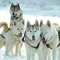 contenu-vacances-jeune-hiver-chiens